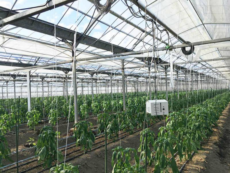 新富町でも農家戸数は減少。耕作放棄地も今後増加する見込みです。