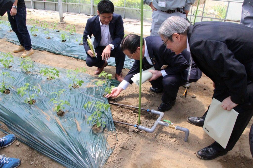 <「ゼロアグリ」から点滴チューブを通して、水と肥料が供給されている様子>